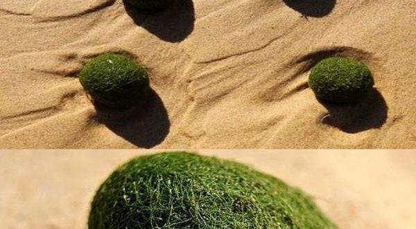 Le misteriose sfere verdi australiane
