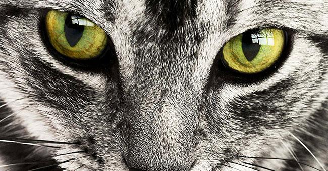 I Gatti E La Consapevolezza Della Morte Ilparanormale